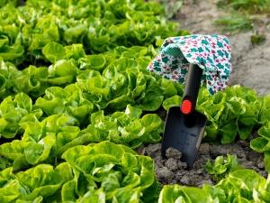 Break at Gardening Work