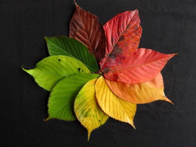 autumn-leaves-1486075_1280